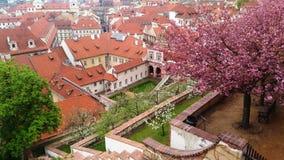 Mola em árvores da flor de Praga imagem de stock royalty free