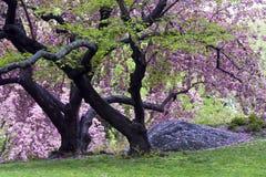Mola em Central Park Fotografia de Stock Royalty Free