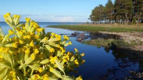 Mola em Saaremaa Fotografia de Stock