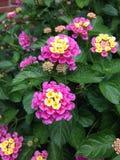 A mola está na flor! Fotografia de Stock Royalty Free
