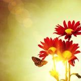 Mola floral Imagens de Stock