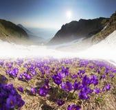 Mola floral da montanha Fotos de Stock Royalty Free