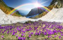 Mola floral da montanha Imagem de Stock