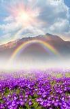 Mola floral da montanha Imagens de Stock