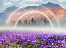 Mola floral da montanha Foto de Stock