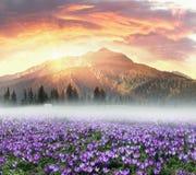 Mola floral da montanha Imagem de Stock Royalty Free