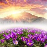 Mola floral da montanha Fotos de Stock