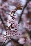 Mola - flores no arbusto Imagens de Stock