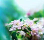 A mola floresce as flores Foto de Stock