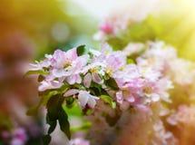 A mola floresce as flores Imagens de Stock
