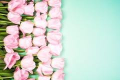 A mola floresce a bandeira - grupo de flores cor-de-rosa da tulipa no fundo do céu azul Fotografia de Stock Royalty Free