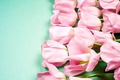 A mola floresce a bandeira - grupo de flores cor-de-rosa da tulipa no fundo do céu azul Imagens de Stock