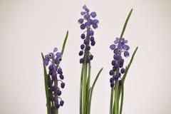A mola floresce com fundo branco e as flores de alta qualidade dentro Imagem de Stock Royalty Free