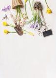 A mola floresce com potenciômetros e ferramentas de jardim no fundo de madeira branco, vista superior Imagem de Stock
