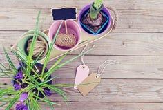A mola floresce em uns potenciômetros no fundo de madeira Fotos de Stock Royalty Free