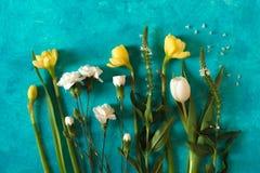 A mola floresce na opinião superior do fundo ciano imagens de stock royalty free