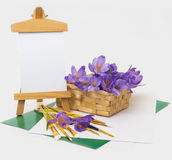 A mola floresce o açafrão na cesta. Fotografia de Stock Royalty Free