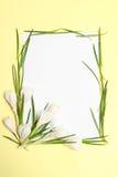 A mola floresce o frame Fotografia de Stock Royalty Free