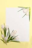 A mola floresce o frame Imagem de Stock