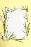 A mola floresce o frame Imagens de Stock Royalty Free