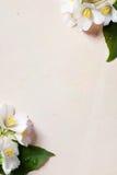 A mola floresce o frame no fundo de papel velho Imagem de Stock Royalty Free