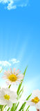 A mola floresce o fundo do céu azul e do sol Fotos de Stock Royalty Free