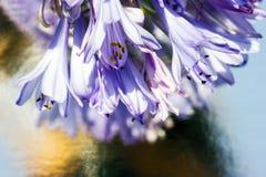 A mola floresce - o fundo floral da mola natural com flores Foco nas flores da mola Opinião da natureza da mola de flores da mola Imagem de Stock Royalty Free