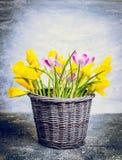 A mola floresce o grupo com narcisos amarelos e açafrões na cesta Fotos de Stock Royalty Free