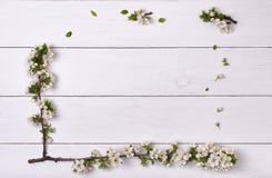 A mola floresce o quadro da flor na opinião superior do fundo de madeira branco da tabela Fotos de Stock Royalty Free