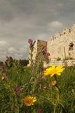 A mola floresce perto das ruínas Imagens de Stock Royalty Free