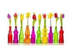 A mola floresce tulipas da decoração no fundo do branco dos vasos imagem de stock