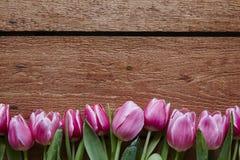 A mola floresce tulipas frescas do dia de Valentim Imagem de Stock