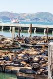 Mola 39 foki z mostem w tle Zdjęcie Royalty Free