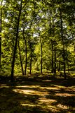 Mola Forest Of Aegean Region imagens de stock