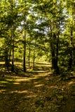 Mola Forest Of Aegean Region fotografia de stock