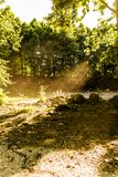 Mola Forest Of Aegean Region fotos de stock