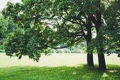 mola, luz, morna, flores, flor, mágica, verão, parque, árvore Fotos de Stock