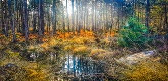 Mola na floresta de Fontainebleau foto de stock
