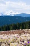 Mola nas montanhas Imagem de Stock Royalty Free