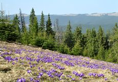 Mola nas montanhas Carpathian Fotos de Stock Royalty Free