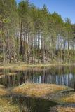 Mola, natureza, floresta da mola, campos, lagos e rios foto de stock