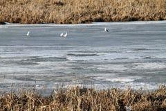 Mola, neve, derretimentos da neve, sol, grama, rio, gaivotas no rio fotografia de stock