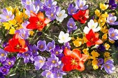 Mola no canteiro de flores Foto de Stock Royalty Free