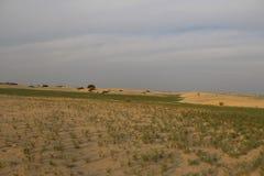 Mola no deserto Fotos de Stock Royalty Free