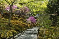 Mola no jardim japonês Imagem de Stock Royalty Free