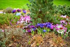 Mola no jardim, Newmarket BRITÂNICO Foto de Stock Royalty Free
