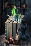 A mola nova floresce em uma vertente de madeira velha Fotografia de Stock Royalty Free