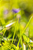 Mola próxima acima da grama verde e de flores coloridas na luz solar fora Fotos de Stock Royalty Free