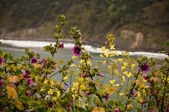 Mola próxima acima de flores coloridas de florescência com o oceano no fundo Fotos de Stock Royalty Free