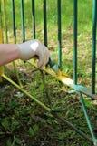 Mola que trabalha no jardim Fotografia de Stock